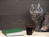 Кот, книга, кружка. Большой серый кот с зелеными глазами. Зеленая книга. Темная кружка с кофем или чаем. Деревянная, темная доска. Натюрморт с котом