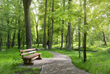 Bench in a beautiful summer park