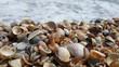 Ракушки на морском берегу.