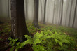 misty forest with green plants on ground
