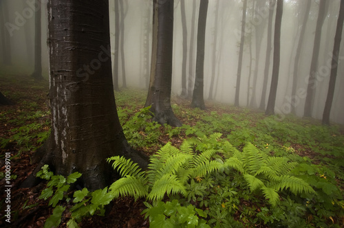 misty forest with green plants on ground © andreiuc88