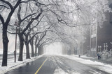 Fototapety Empty street with bicycle lane markings bordered with bare trees covered in frost on winter morning