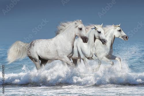 Horse herd run gallop in waves in the ocean Poster