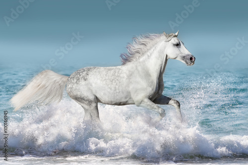 White stallion run gallop in waves in the ocean Poster