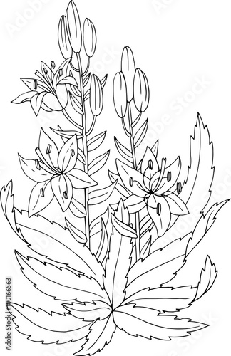 flowers and leaves