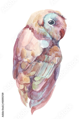 owl watercolor - 100193709
