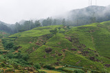 Rural landscape with tea plantation near Nuwara Eliya, Sri Lanka