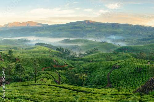 Foto op Canvas Koffie Mountain tea plantations in Munnar