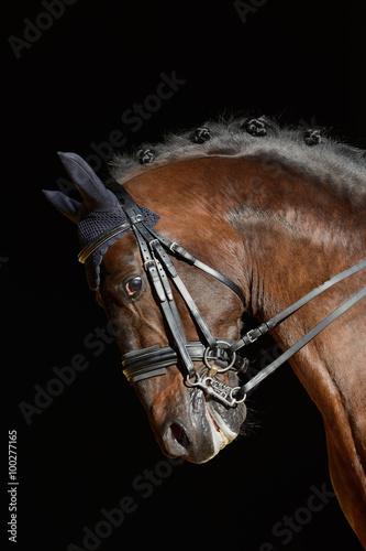 Plakat Portrait of the sport horse