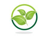 Circle Leaf Tree
