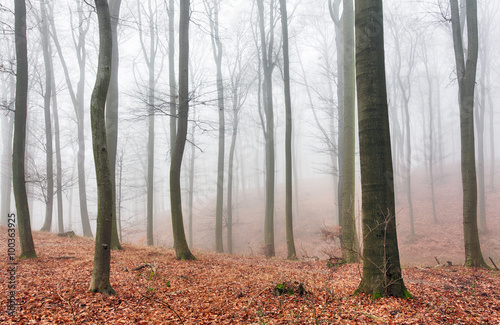 Autumn forest with trees at mist © TTstudio