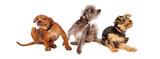 tři psi svědění škrábání horizontální banner