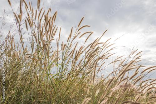 Wind blowing meadow - 100563903