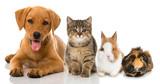 Fototapety Haustiere