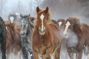 雪原を走る馬の集団 © makieni