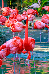 Flamboyance of Flamingos © pngstudio