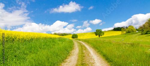 mata magnetyczna Weg im Frühling - Way in springtime