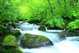 Fototapety 青森県十和田 夏の奥入瀬渓流