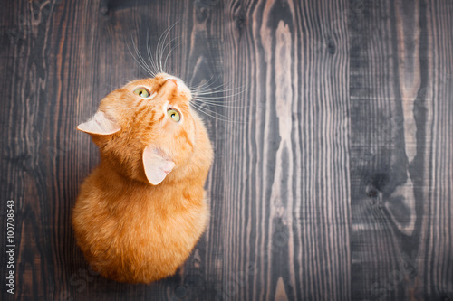 Poster, Tablou Cat sitting on the wooden floor
