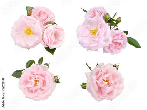 Zdjęcia na płótnie, fototapety, obrazy : Pale pink roses and buds set