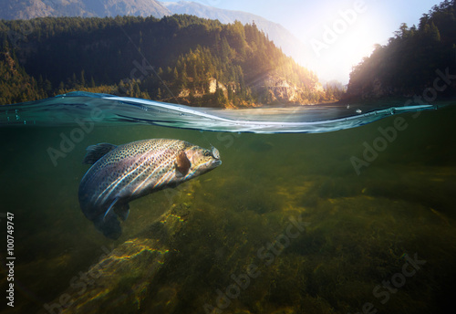 Plagát, Obraz Fishing. Close-up shut of a fish hook under water