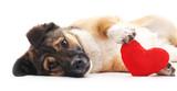 Dog  Heart Wall Sticker