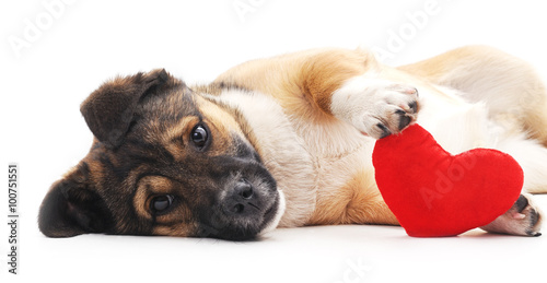 Dog with heart. Poster