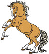 Obrazy na płótnie, fototapety, zdjęcia, fotoobrazy drukowane : rearing horse