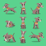 Cartoon character greyhound dog poses