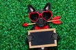 Obrazy na płótnie, fototapety, zdjęcia, fotoobrazy drukowane : valentines dog in love
