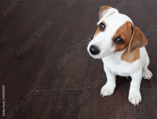 Poster Puppy