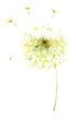 Painting, drawing, vector illustration - air dandelions