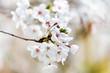 Obrazy na płótnie, fototapety, zdjęcia, fotoobrazy drukowane : spring tree