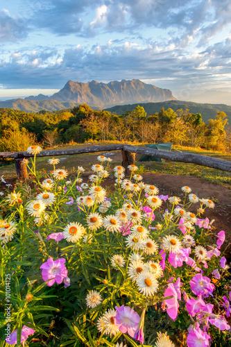 Keuken foto achterwand Nieuw Zeeland Beautiful mountain Doi Luang Chiang Dao in the foreground blooming wildflowers at sunrise, Chiang Mai Province, Thailand