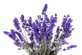 Closeup of lavender flowers over white background - 101044746
