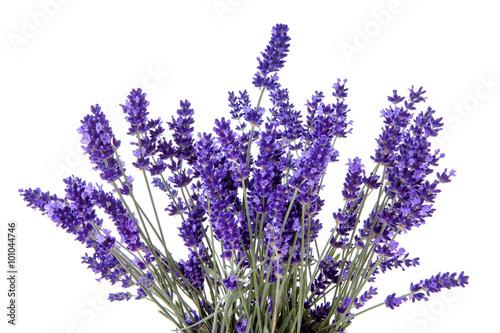 Fotobehang Lavendel Closeup of lavender flowers over white background