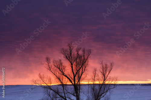 Poster Aubergine Winter nature landscape. Silhouette of tree at sunset