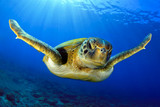 Flying green turtle - 101107598