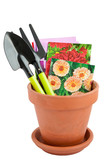 Flower pot and seeds