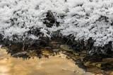 Fiori di ghiaccio sull