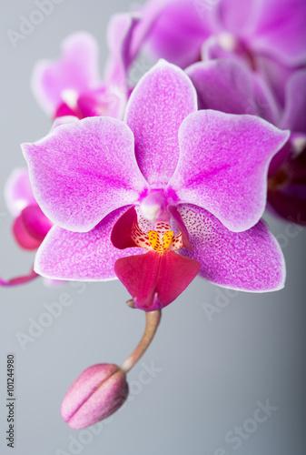 ladne-kwiatowe-storczyki