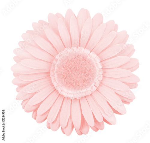 single isolated fake gerbera flower, pantone color of the year 2016 rose quartz pink - 101284954