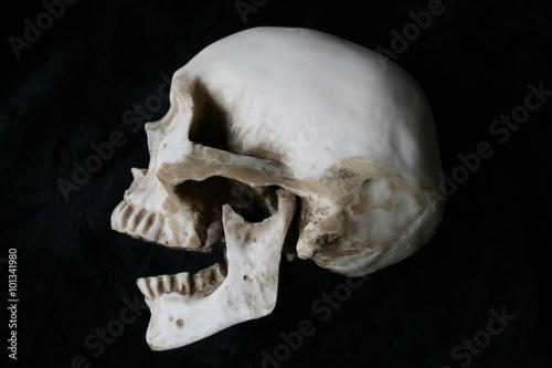 Poster Cráneo humano de perfil en fondo negro