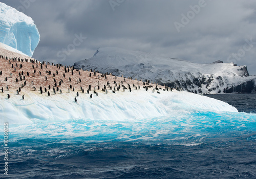 Papiers peints Antarctique Colony of penguins on iceberg washed by blue water, with mountain and clouds in background, South Sandwich Islands, Antarctica