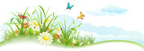 Fototapety Green spring summer banner with grass, flowers, butterfly and clouds