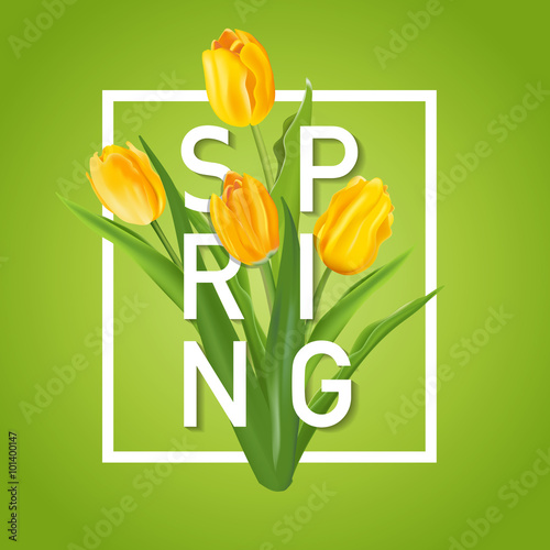Obraz Spring Flower Background - with Tulips - in vector