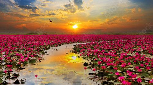 Papiers peints Zen Sunshine rising lotus flower in Thailand