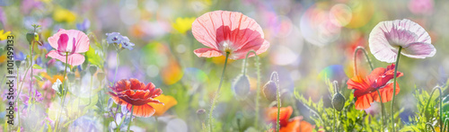 summer meadow with red poppies - 101499133