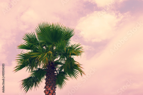 palm tree krone branches - photo #21