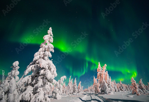 Winter landscape with forest and polar light over the taiga Poster